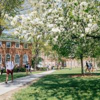 cherry blossom trees and dappled sunlight on campus at spring